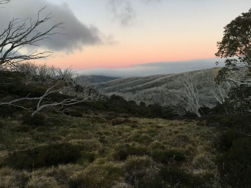 Bogong High Plains Sunrise (1)